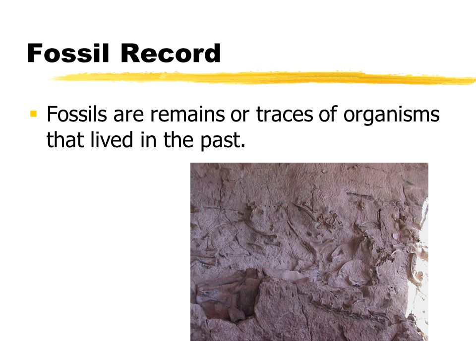 Fossil Record Fossils are remains or traces of organisms that lived in the past.