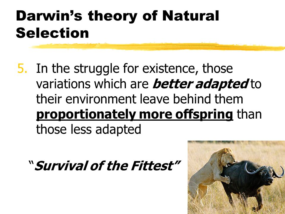 Darwin's theory of Natural Selection