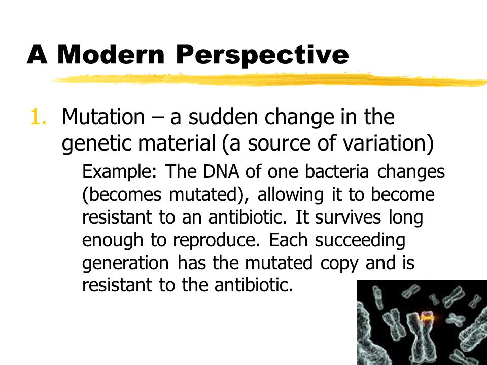 A Modern Perspective Mutation – a sudden change in the genetic material (a source of variation)