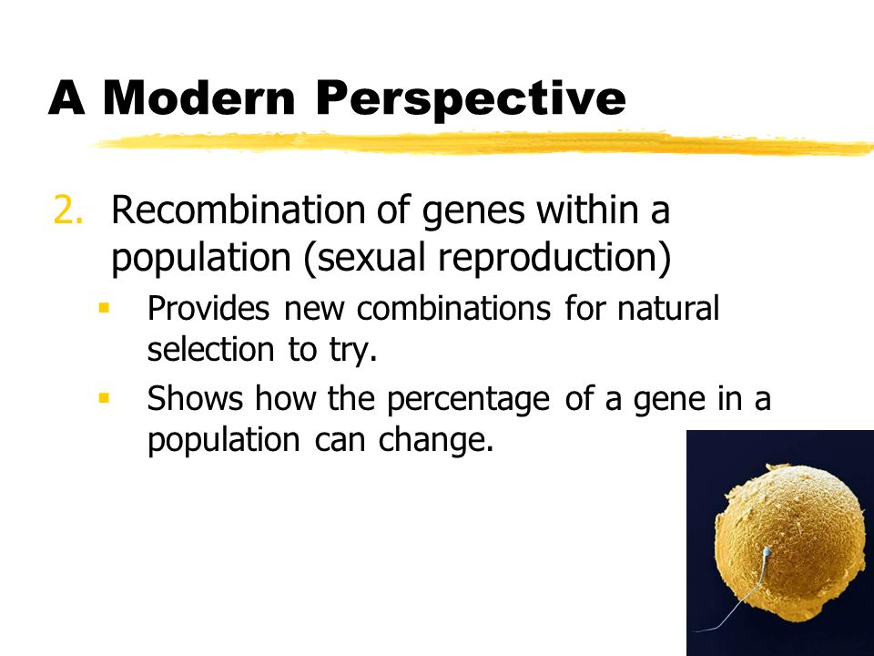 A Modern Perspective Recombination of genes within a population (sexual reproduction) Provides new combinations for natural selection to try.