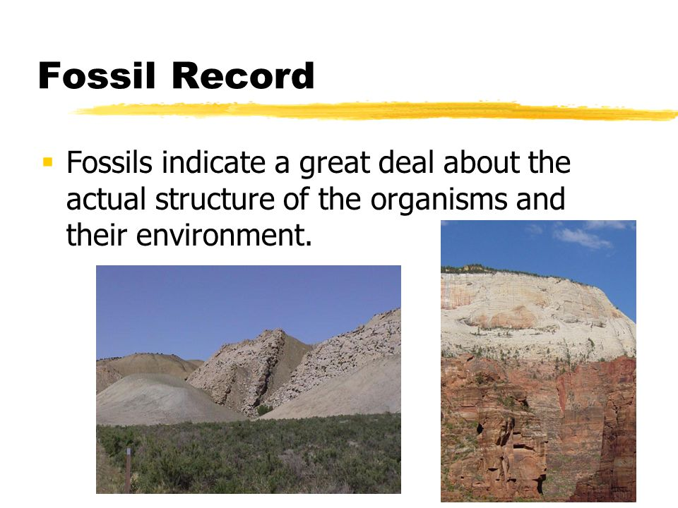 Fossil Record Fossils indicate a great deal about the actual structure of the organisms and their environment.