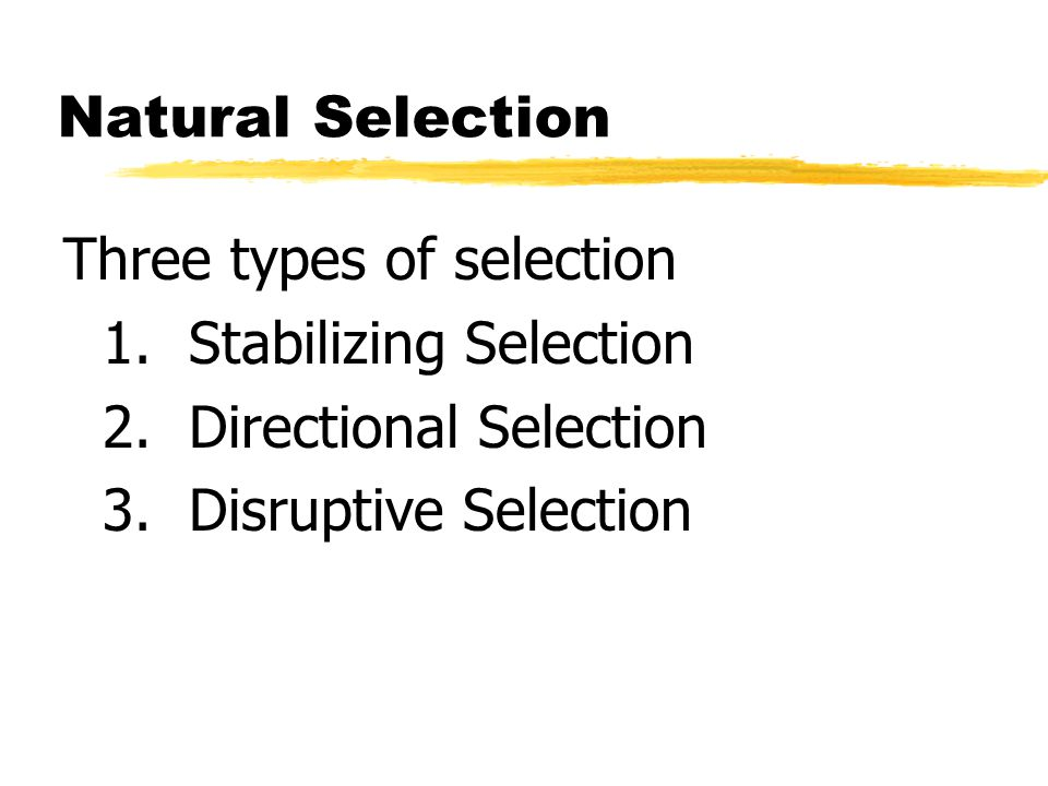 Natural Selection Three types of selection. 1. Stabilizing Selection. 2. Directional Selection.