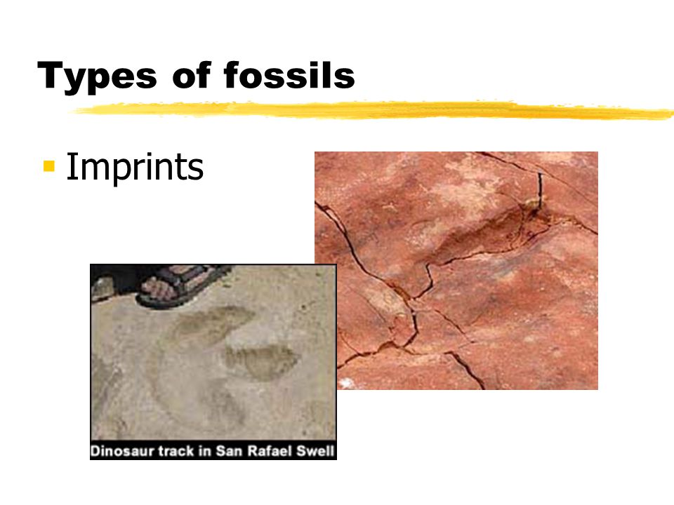 Types of fossils Imprints