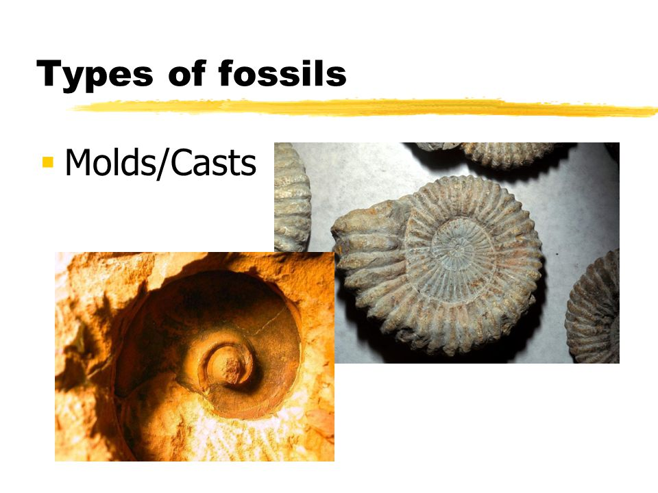 Types of fossils Molds/Casts