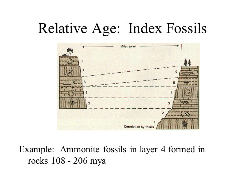 Relative Age: Index Fossils
