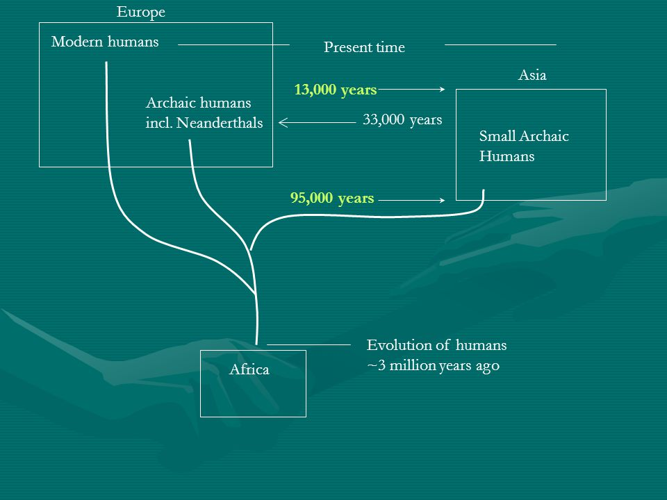 Europe Modern humans. Present time. Asia. 13,000 years. Archaic humans. incl. Neanderthals. 33,000 years.