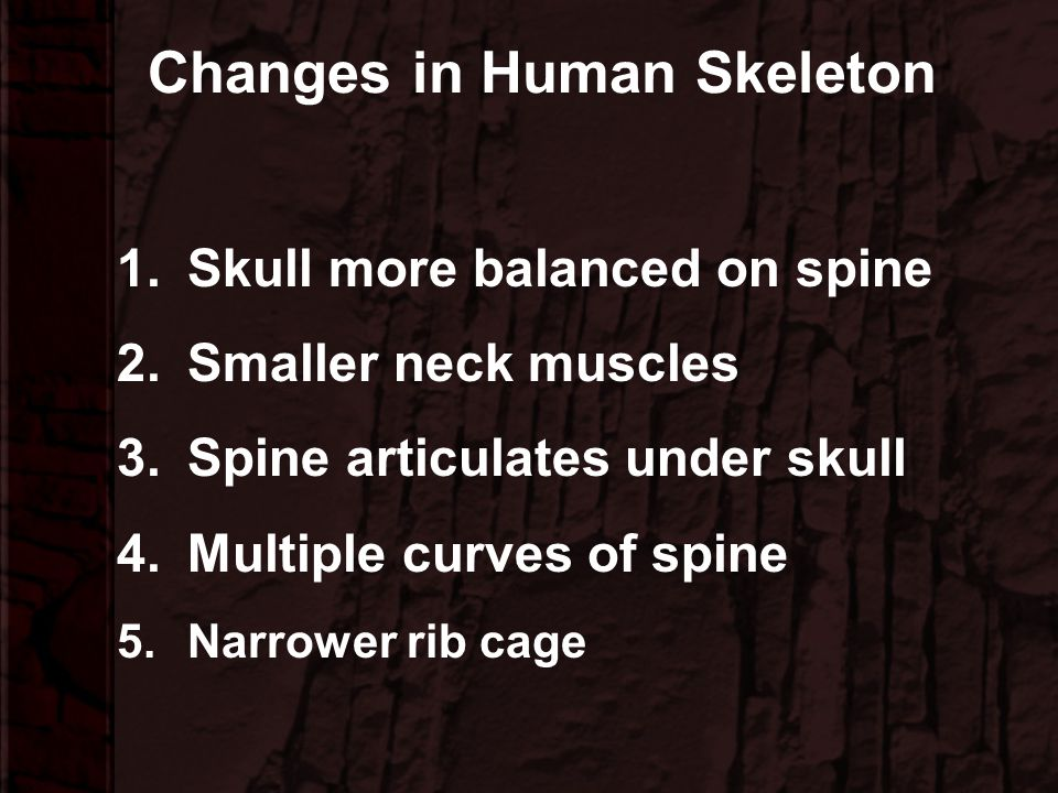 Changes in Human Skeleton
