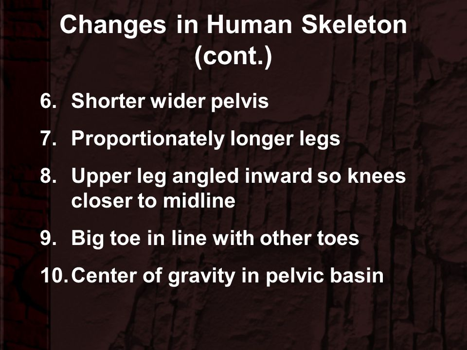 Changes in Human Skeleton (cont.)
