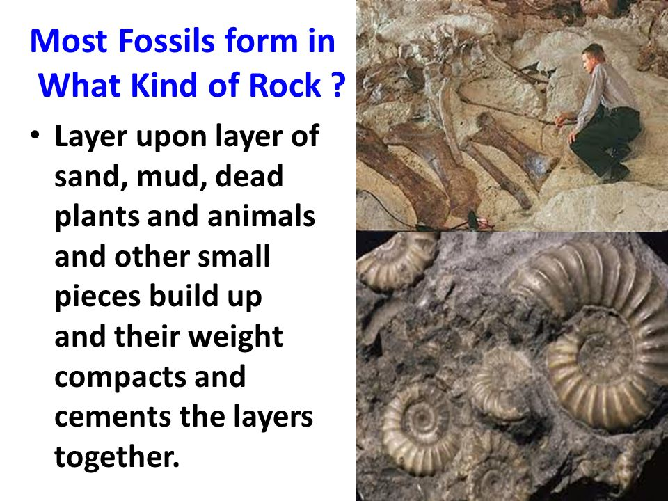 Most Fossils form in What Kind of Rock