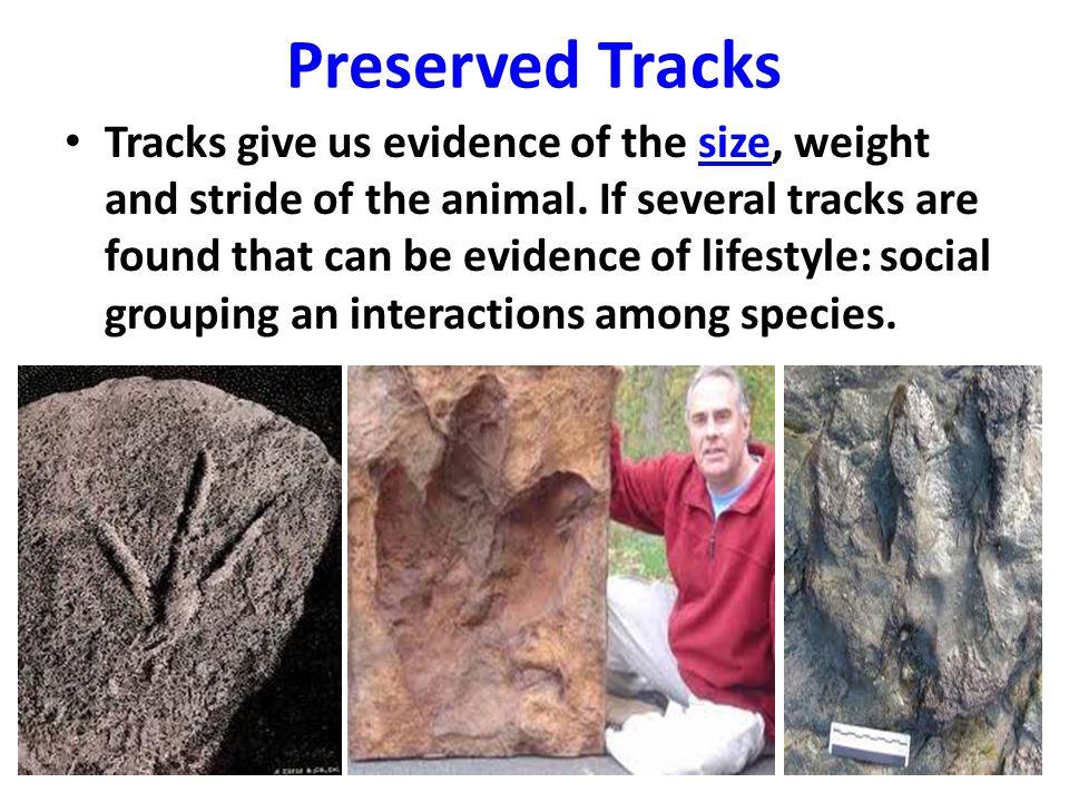 Preserved Tracks