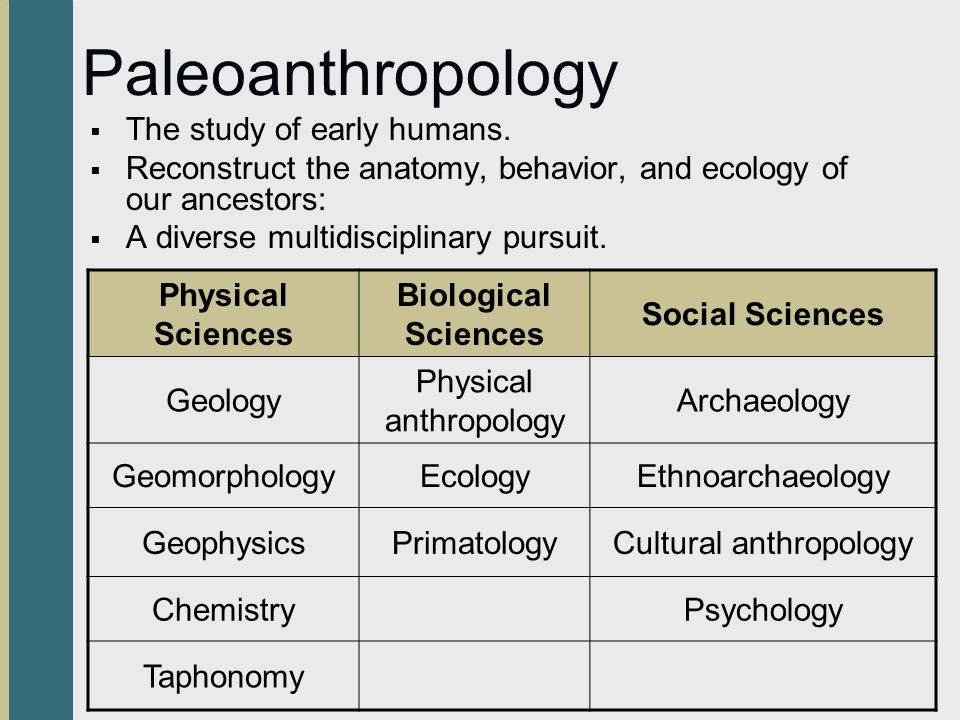Paleoanthropology The study of early humans.