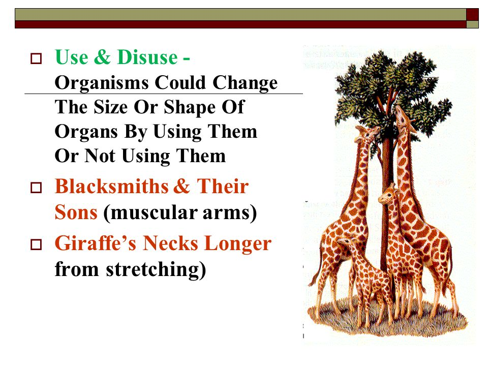 Use & Disuse - Organisms Could Change The Size Or Shape Of Organs By Using Them Or Not Using Them