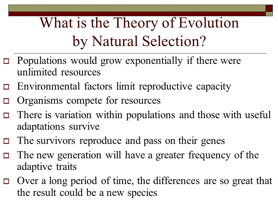 What is the Theory of Evolution by Natural Selection