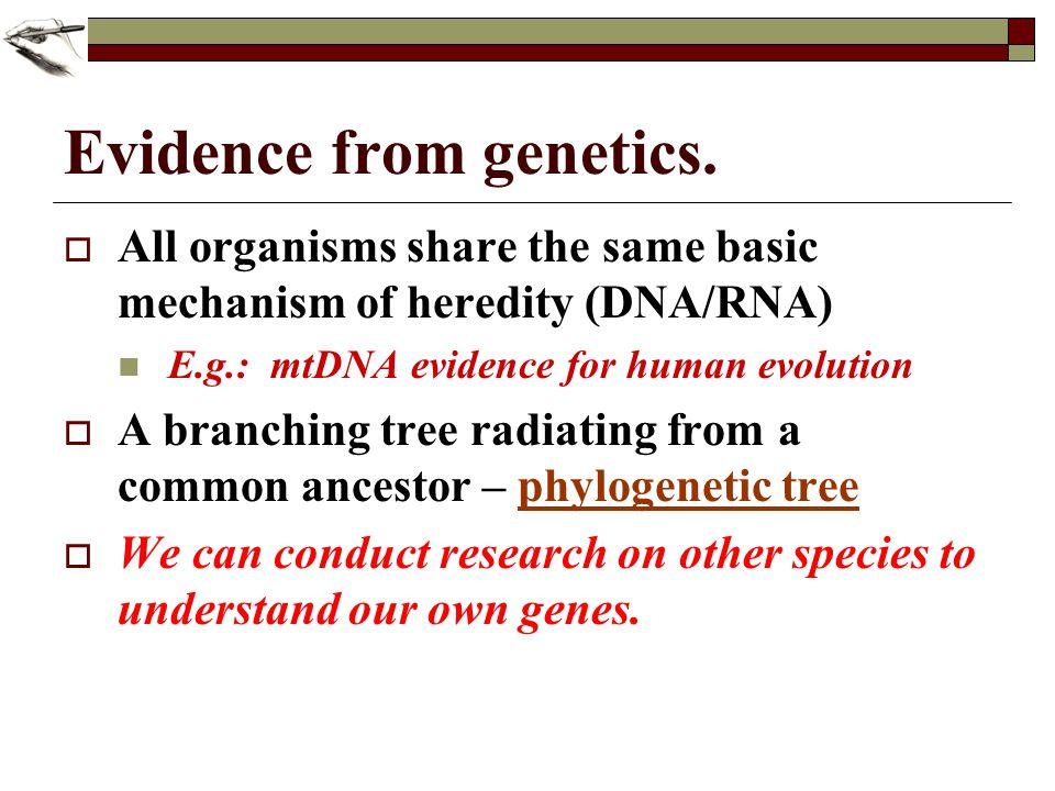Evidence from genetics.