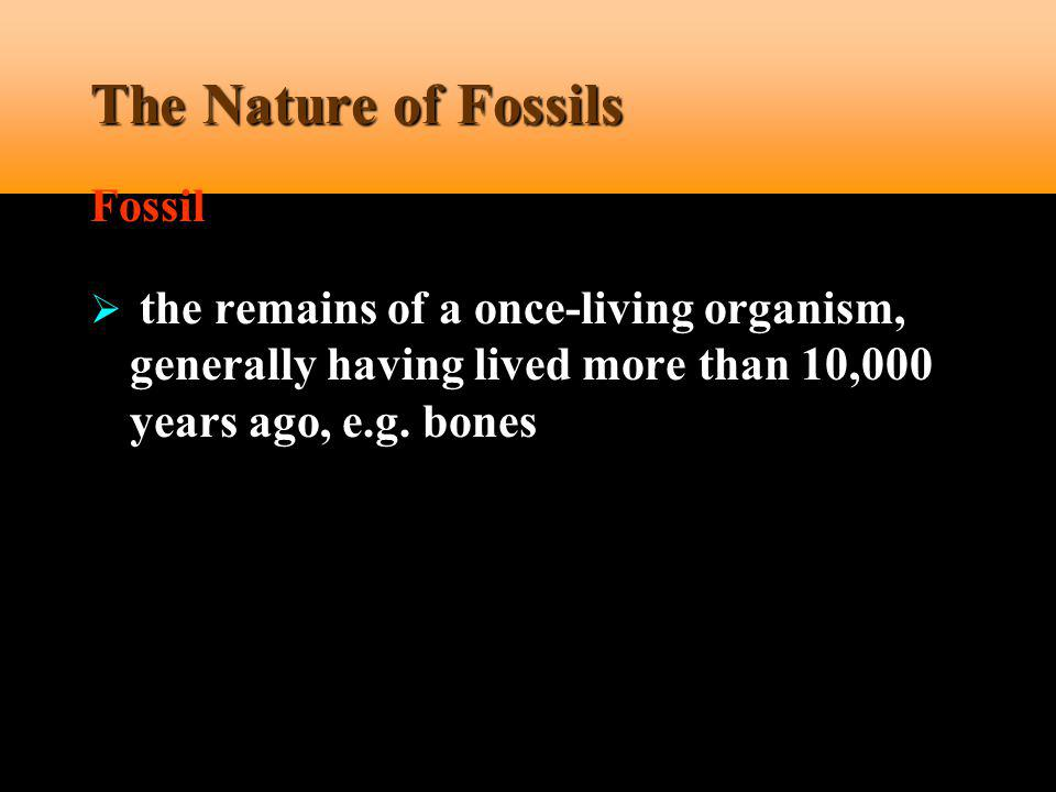 The Nature of Fossils Fossil