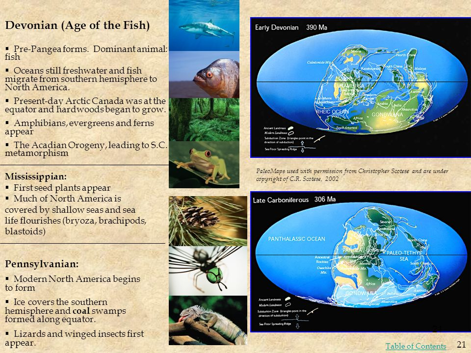 Devonian (Age of the Fish)