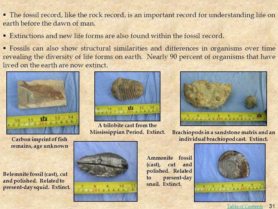 The fossil record, like the rock record, is an important record for understanding life on earth before the dawn of man.