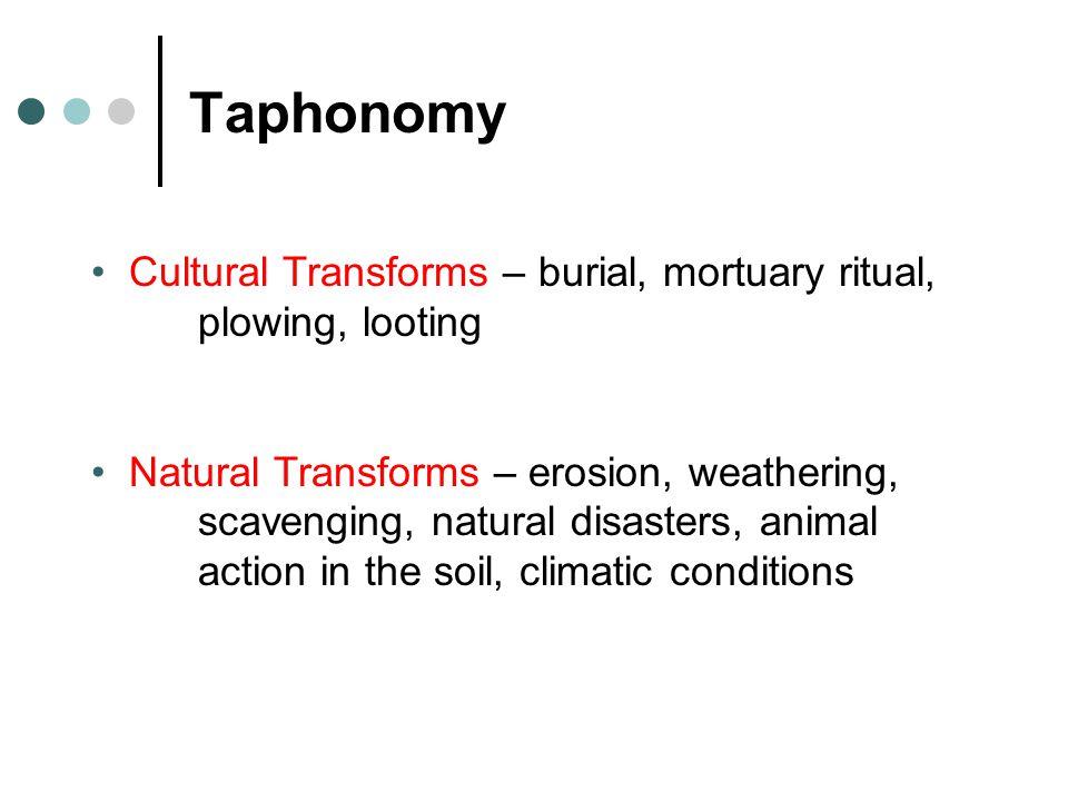 Taphonomy Cultural Transforms – burial, mortuary ritual, plowing, looting.