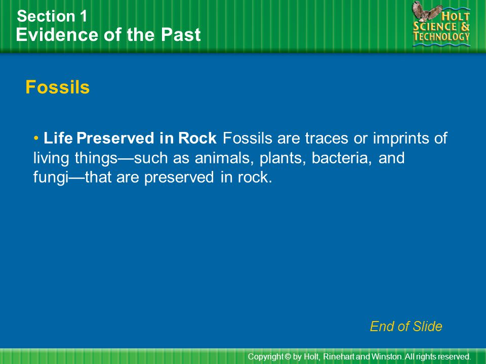 Evidence of the Past Fossils Section 1
