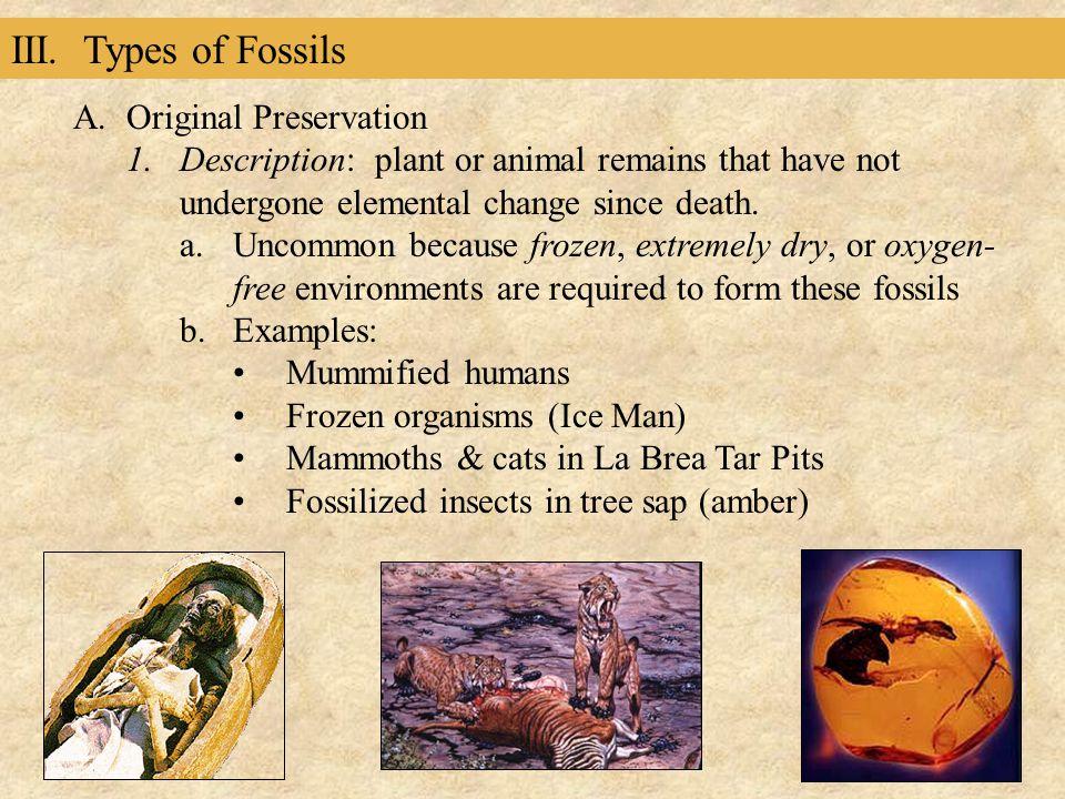 III. Types of Fossils Original Preservation