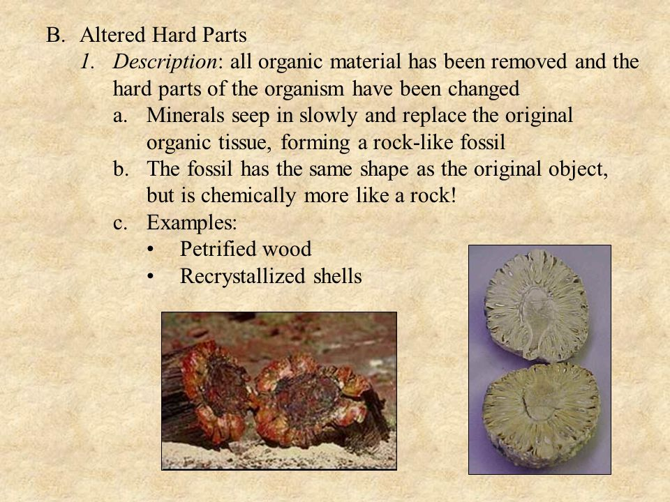 B. Altered Hard Parts Description: all organic material has been removed and the hard parts of the organism have been changed.