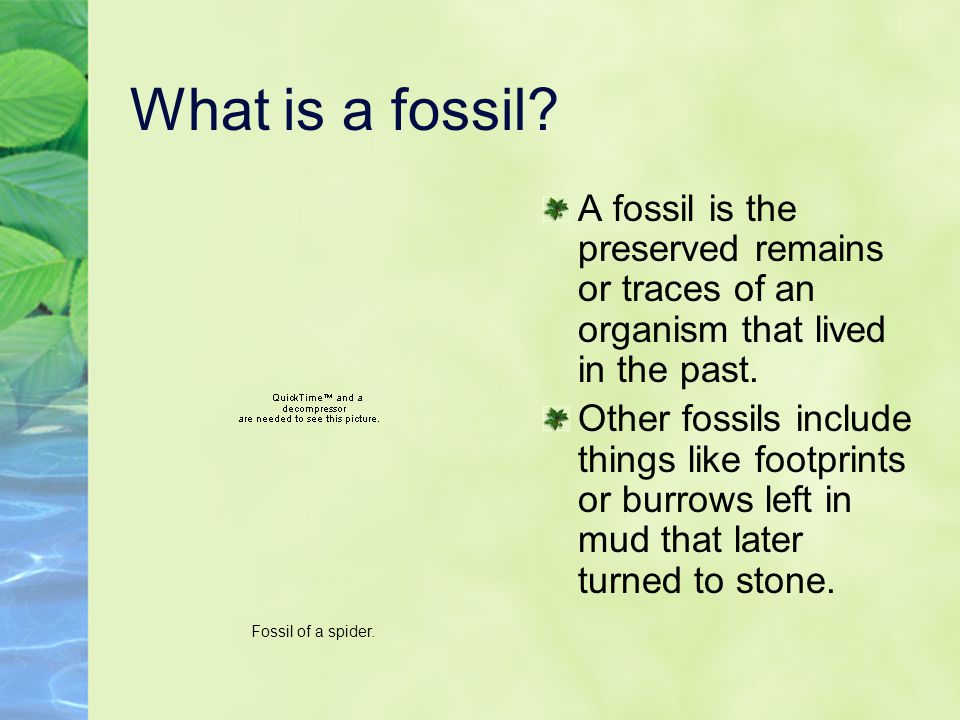 What is a fossil A fossil is the preserved remains or traces of an organism that lived in the past.