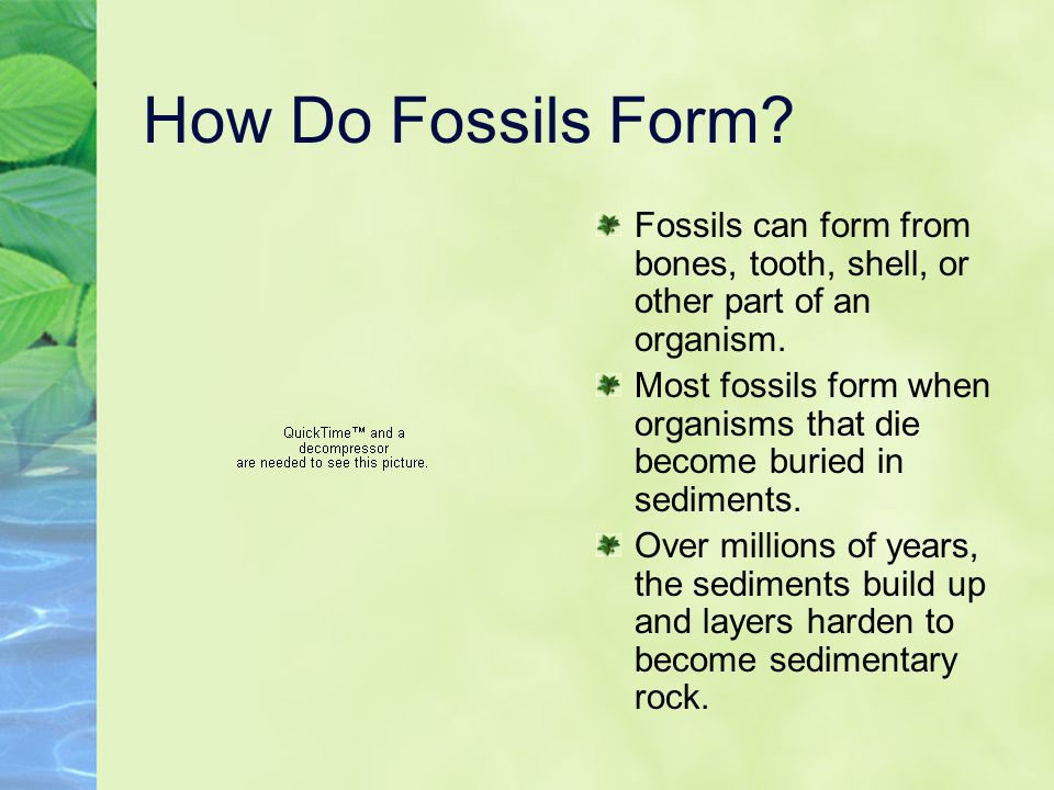 How Do Fossils Form Fossils can form from bones, tooth, shell, or other part of an organism.
