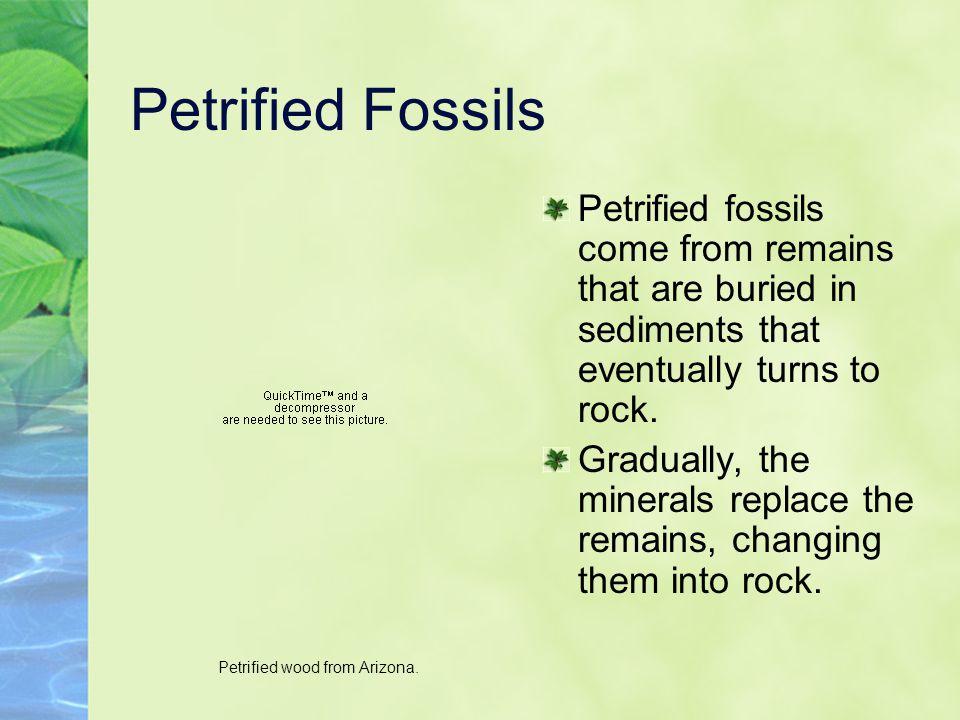 Petrified wood from Arizona.