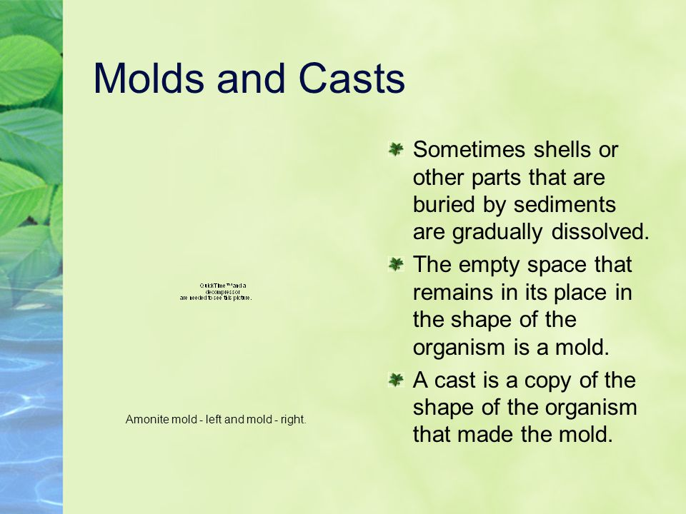 Amonite mold - left and mold - right.
