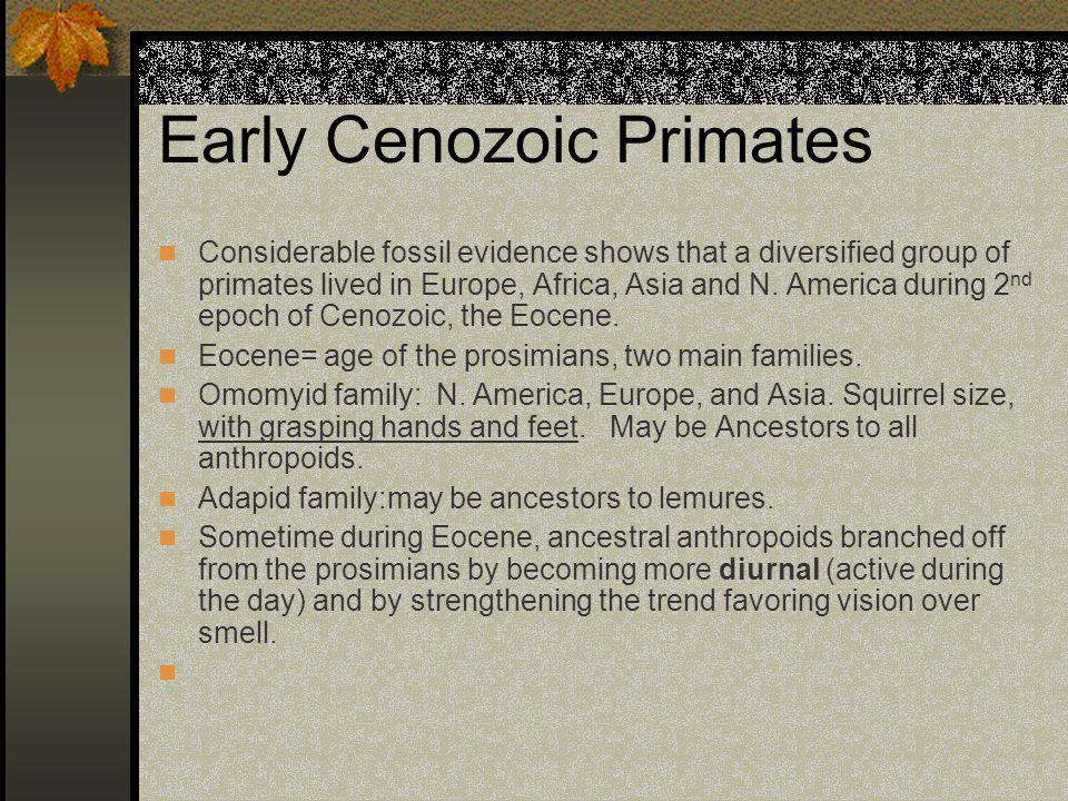 Early Cenozoic Primates