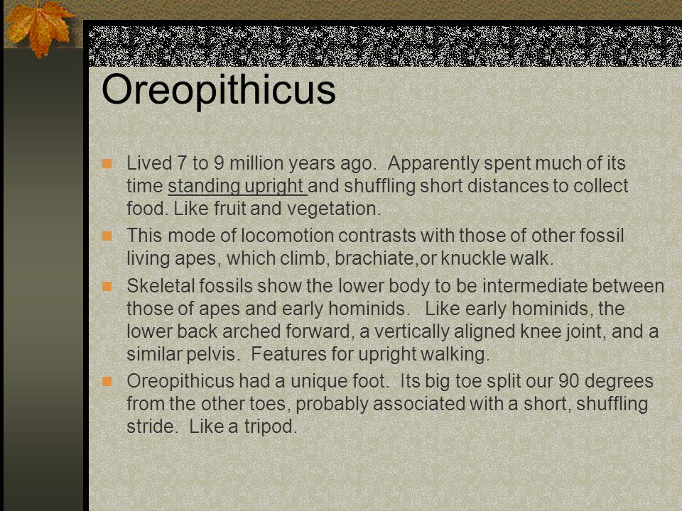 Oreopithicus
