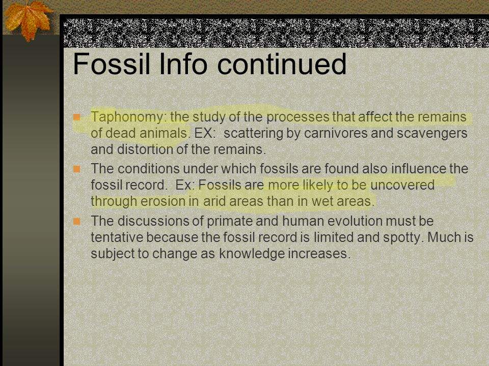 Fossil Info continued