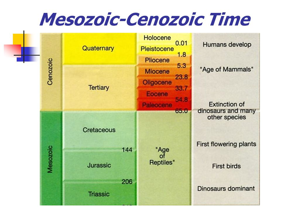 Mesozoic-Cenozoic Time