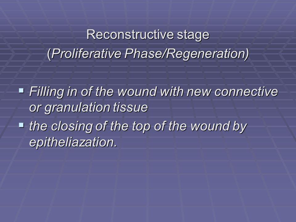 (Proliferative Phase/Regeneration)