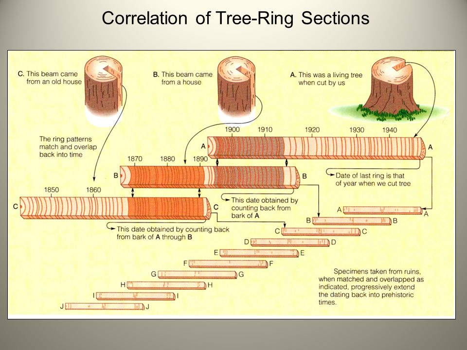 Correlation of Tree-Ring Sections