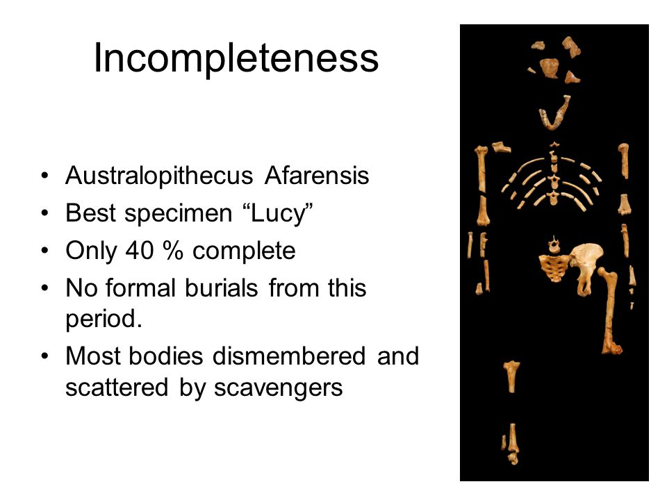 Incompleteness Australopithecus Afarensis Best specimen Lucy