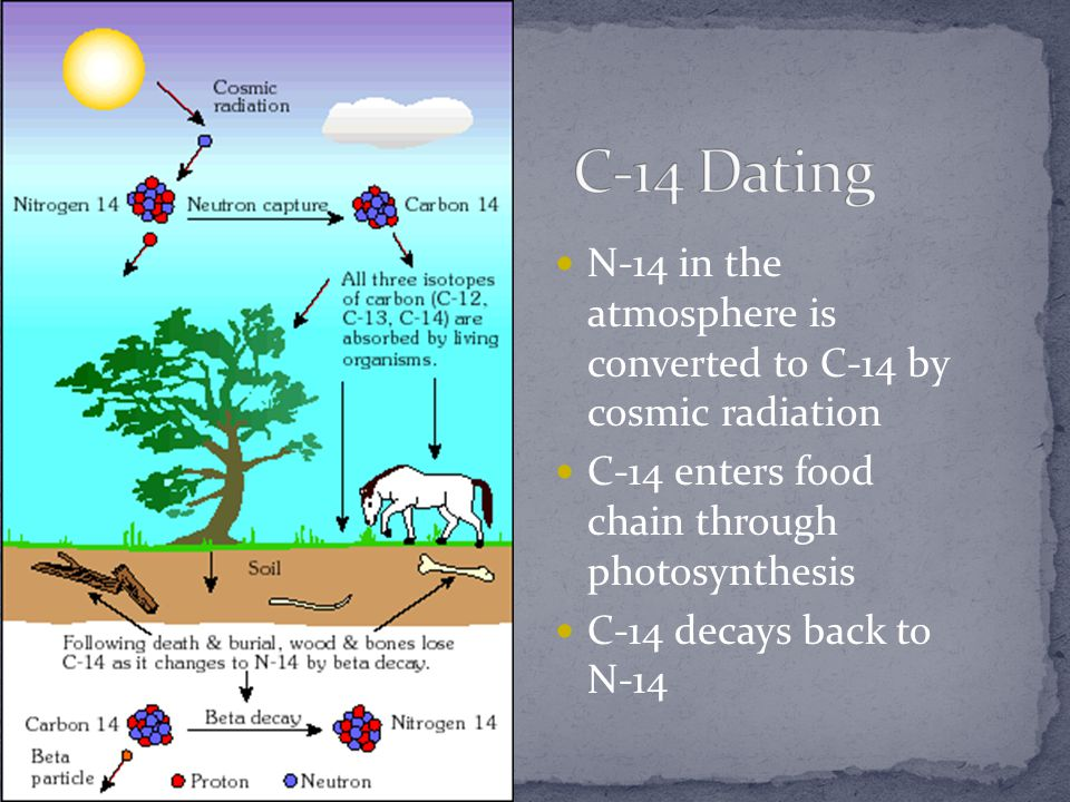 C-14 Dating N-14 in the atmosphere is converted to C-14 by cosmic radiation. C-14 enters food chain through photosynthesis.