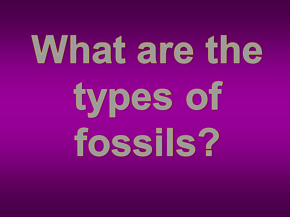 What are the types of fossils