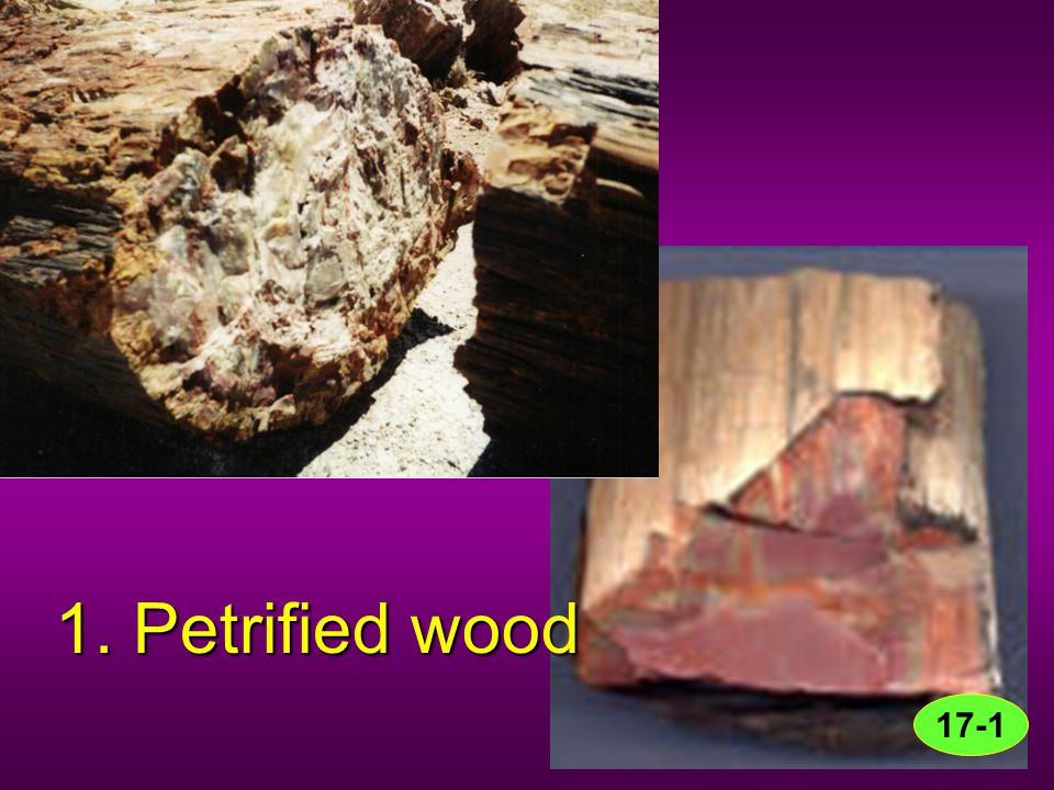 1. Petrified wood 17-1