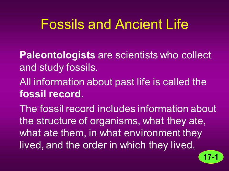 Fossils and Ancient Life