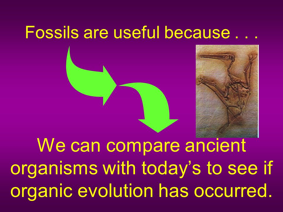 Fossils are useful because . . .