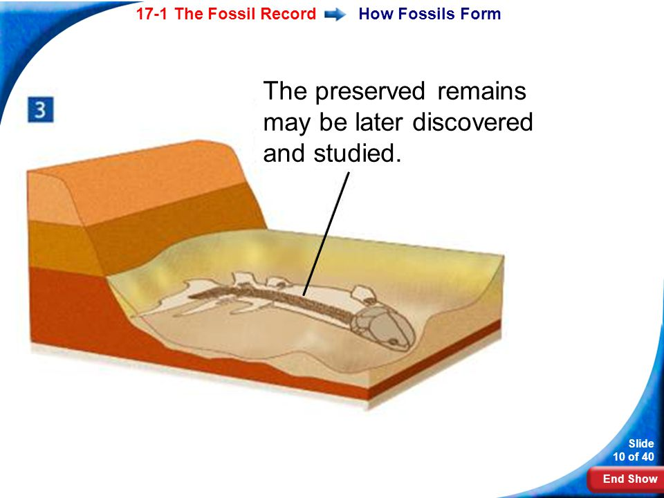 The preserved remains may be later discovered and studied.