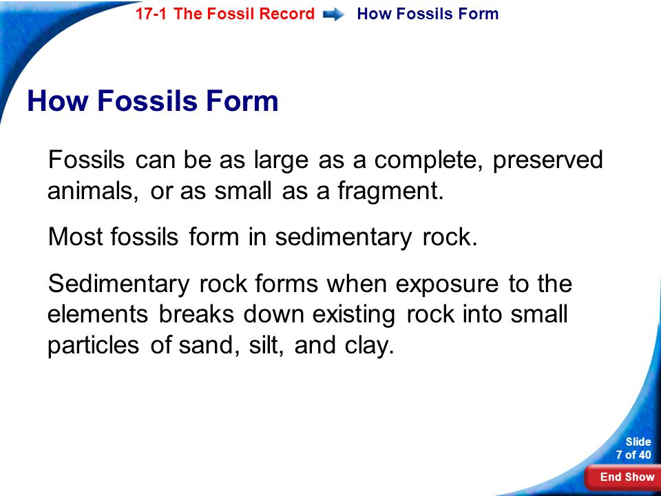 How Fossils Form How Fossils Form. Fossils can be as large as a complete, preserved animals, or as small as a fragment.