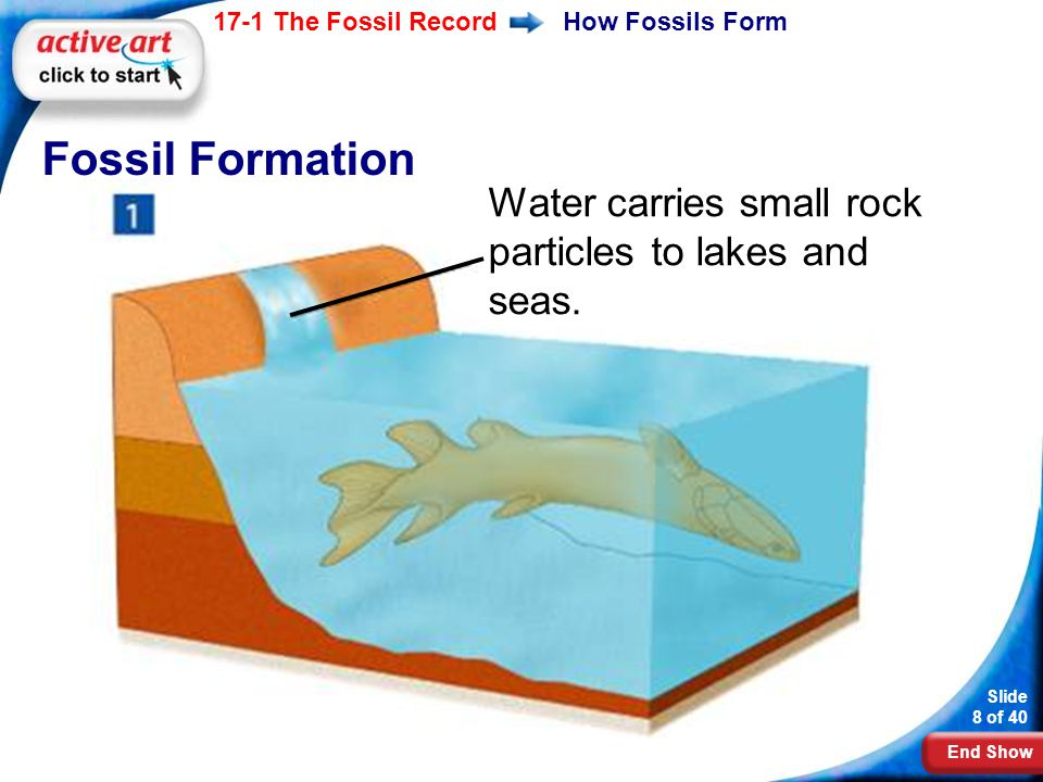 Fossil Formation Water carries small rock particles to lakes and seas.