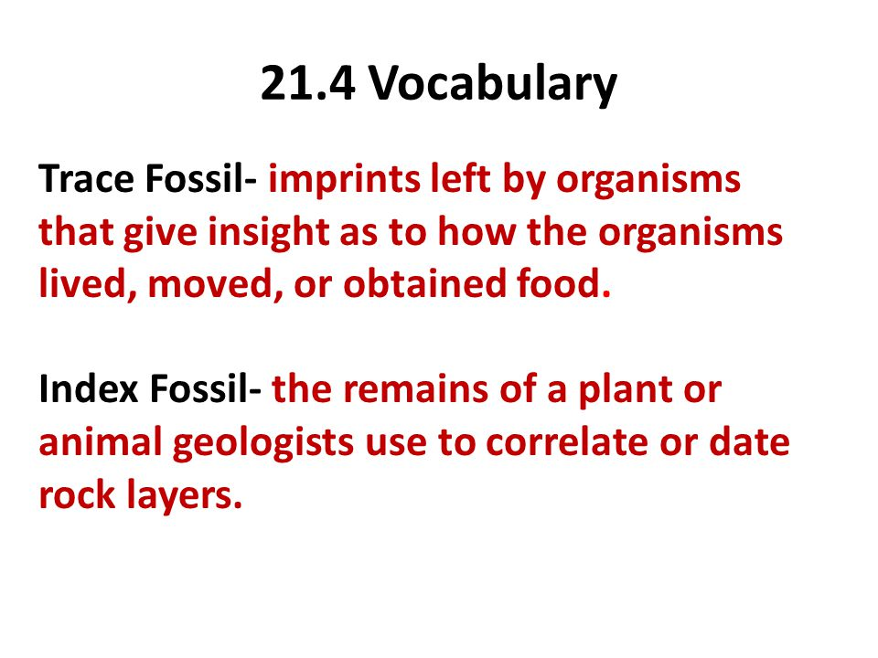 21.4 Vocabulary Trace Fossil- imprints left by organisms that give insight as to how the organisms lived, moved, or obtained food.