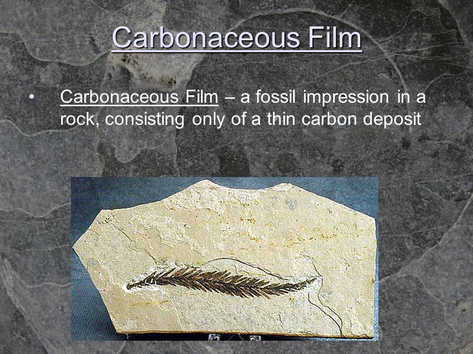 Carbonaceous Film Carbonaceous Film – a fossil impression in a rock, consisting only of a thin carbon deposit.