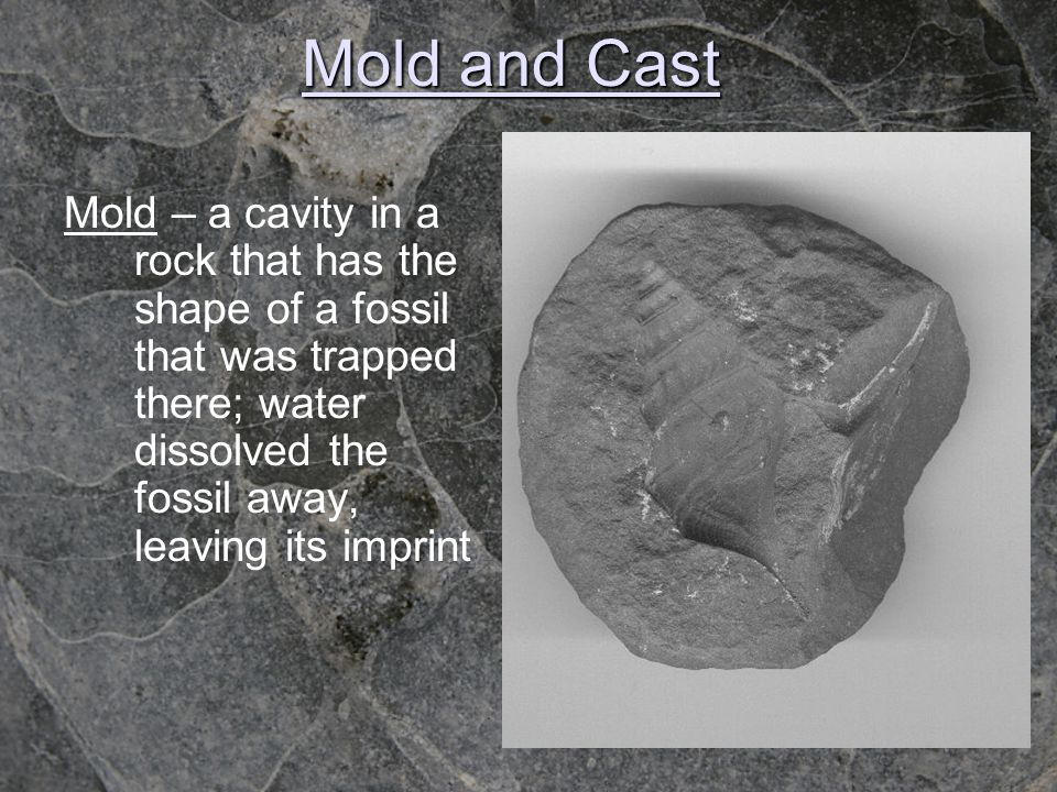 Mold and Cast Mold – a cavity in a rock that has the shape of a fossil that was trapped there; water dissolved the fossil away, leaving its imprint.