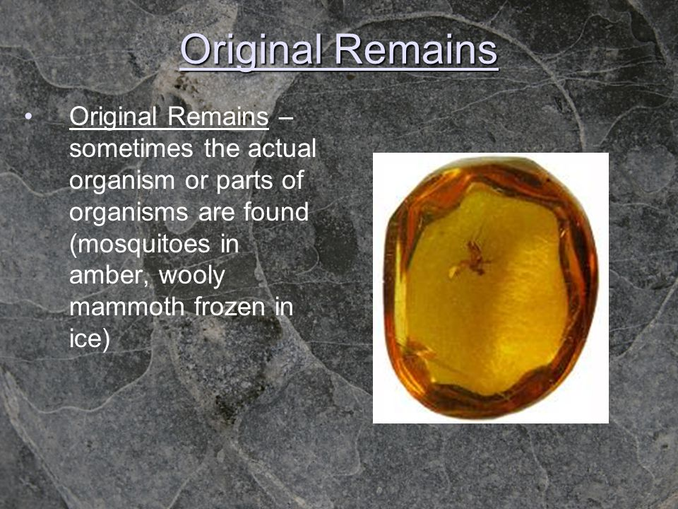 Original Remains Original Remains – sometimes the actual organism or parts of organisms are found (mosquitoes in amber, wooly mammoth frozen in ice)