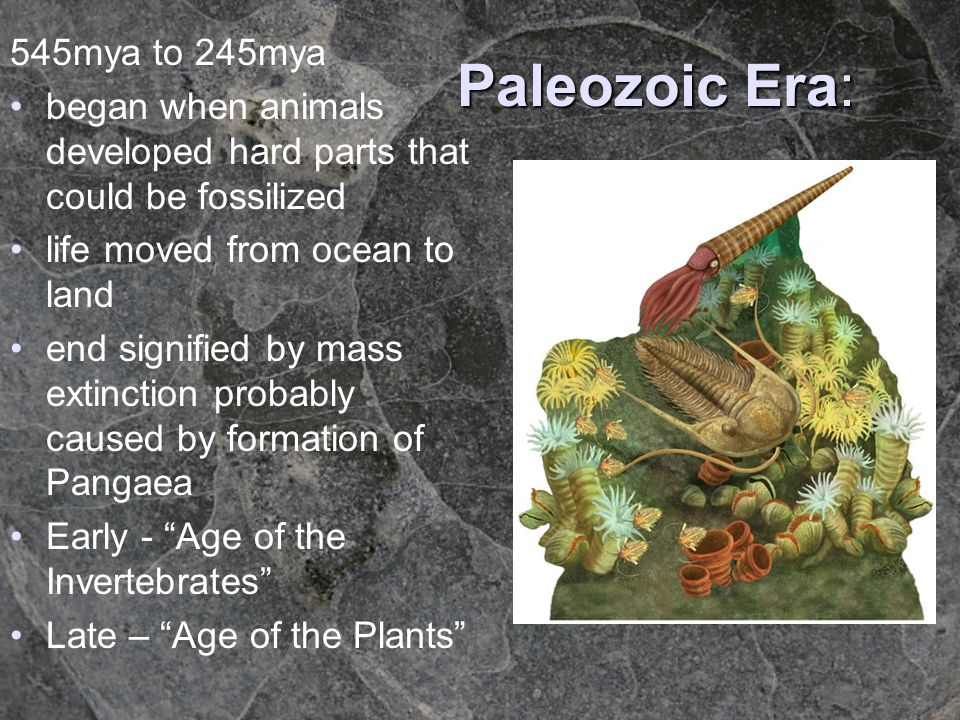 Paleozoic Era: 545mya to 245mya