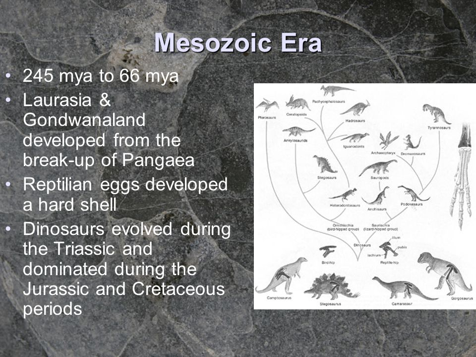 Mesozoic Era 245 mya to 66 mya. Laurasia & Gondwanaland developed from the break-up of Pangaea. Reptilian eggs developed a hard shell.